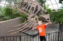 Giant Sea Turtle Skeleton