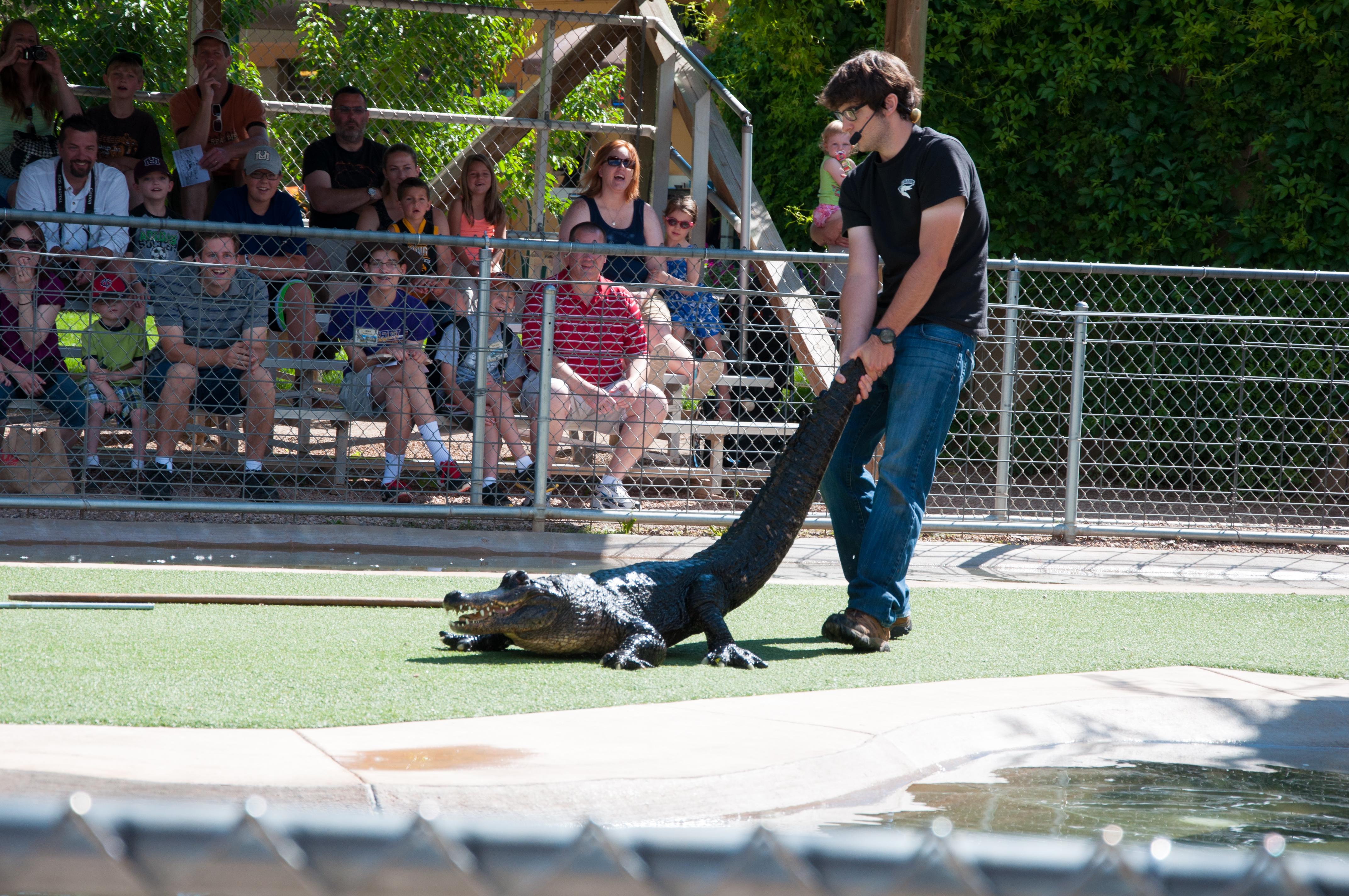 Reptile Gardens 2 Snap Eat Run
