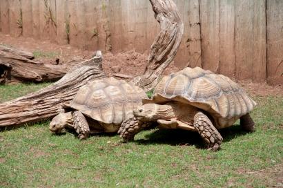 Tortoise race ;)