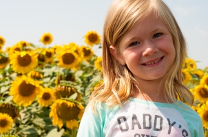 Sunflowers-7